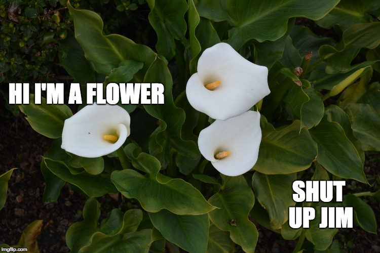 HI I'M A FLOWER SHUT UP JIM | image tagged in flower | made w/ Imgflip meme maker