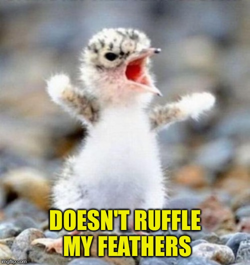 DOESN'T RUFFLE MY FEATHERS | made w/ Imgflip meme maker