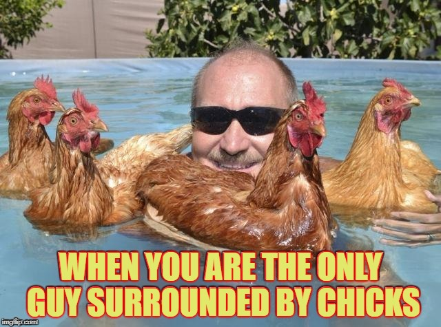 Who gives a cluck | WHEN YOU ARE THE ONLY GUY SURROUNDED BY CHICKS | image tagged in hot chick magnet,chickens,ba caw,birdy call memes | made w/ Imgflip meme maker