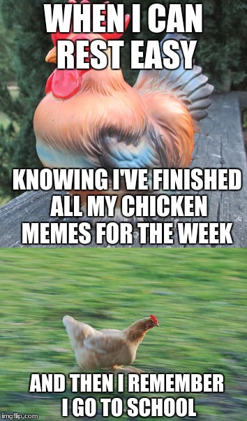 The Crisis of a Young Memester | WHEN I CAN REST EASY KNOWING I'VE FINISHED ALL MY CHICKEN MEMES FOR THE WEEK AND THEN I REMEMBER I GO TO SCHOOL | image tagged in chicken week,memes | made w/ Imgflip meme maker