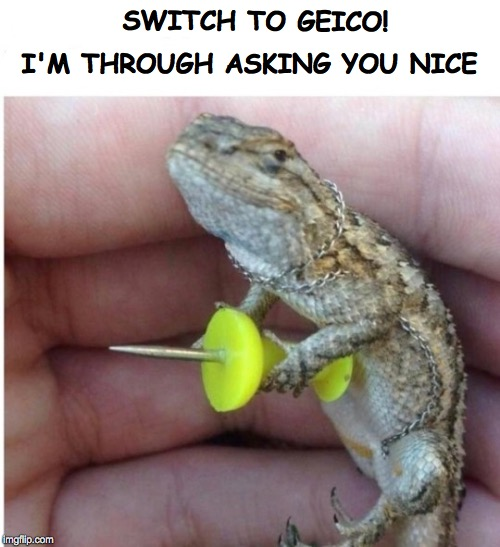 SWITCH TO GEICO! I'M THROUGH ASKING YOU NICE | image tagged in geico gecko | made w/ Imgflip meme maker