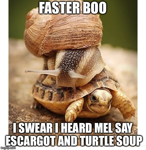 Bad dinner invitation | FASTER BOO I SWEAR I HEARD MEL SAY ESCARGOT AND TURTLE SOUP | image tagged in snail riding turtle,escargot,turtle soup,meme | made w/ Imgflip meme maker