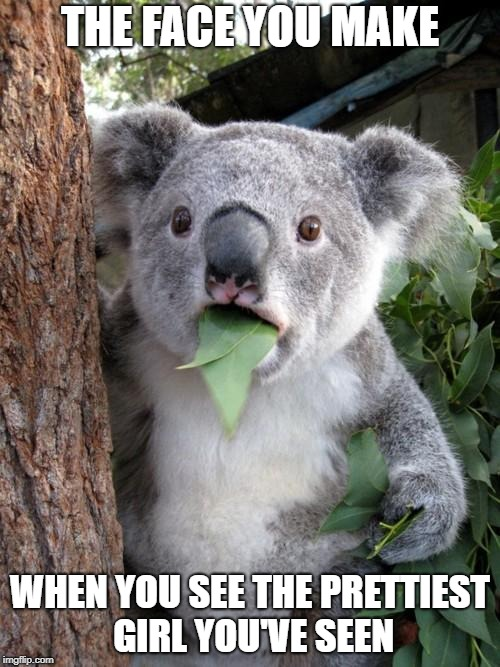 Surprised Koala Meme | THE FACE YOU MAKE WHEN YOU SEE THE PRETTIEST GIRL YOU'VE SEEN | image tagged in memes,surprised koala | made w/ Imgflip meme maker