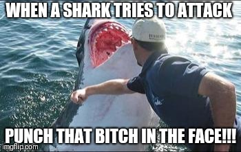 Shark punch | WHEN A SHARK TRIES TO ATTACK PUNCH THAT B**CH IN THE FACE!!! | image tagged in shark punch | made w/ Imgflip meme maker