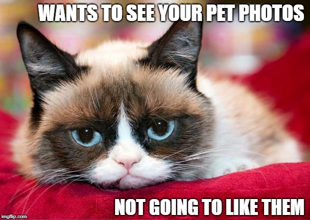 Post pictures of your pets in the comment section | WANTS TO SEE YOUR PET PHOTOS NOT GOING TO LIKE THEM | image tagged in grumpy cat,memes | made w/ Imgflip meme maker