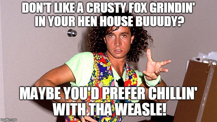 Pauly Shore | DON'T LIKE A CRUSTY FOX GRINDIN' IN YOUR HEN HOUSE BUUUDY? MAYBE YOU'D PREFER CHILLIN' WITH THA WEASLE! | image tagged in pauly shore | made w/ Imgflip meme maker