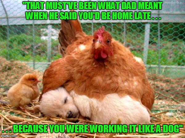 "an issue for all species (Chicken Week, April 2nd-8th, a JBmemegeek & giveuahint thingy) | ""THAT MUST'VE BEEN WHAT DAD MEANT WHEN HE SAID YOU'D BE HOME LATE . . . . . . BECAUSE YOU WERE WORKING IT LIKE A DOG"" 