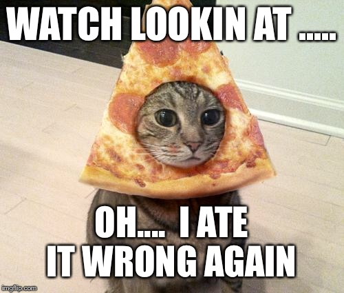 pizza cat | WATCH LOOKIN AT ..... OH....  I ATE IT WRONG AGAIN | image tagged in pizza cat | made w/ Imgflip meme maker