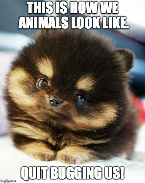 cute eyes animal | THIS IS HOW WE ANIMALS LOOK LIKE. QUIT BUGGING US! | image tagged in cute eyes animal | made w/ Imgflip meme maker