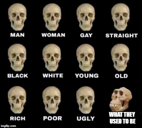 idiot skull | WHAT THEY USED TO BE | image tagged in idiot skull | made w/ Imgflip meme maker