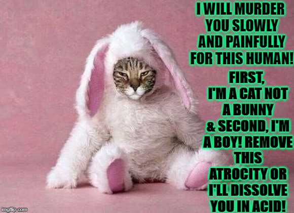 I WILL MURDER YOU SLOWLY AND PAINFULLY FOR THIS HUMAN! FIRST, I'M A CAT NOT A BUNNY & SECOND, I'M A BOY! REMOVE THIS ATROCITY OR I'LL DISSOL | image tagged in mad bunny cat | made w/ Imgflip meme maker