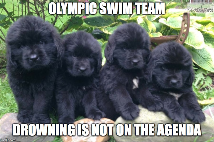 OLYMPIC SWIM TEAM DROWNING IS NOT ON THE AGENDA | made w/ Imgflip meme maker