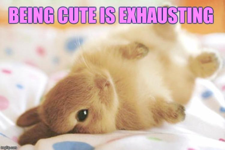 BEING CUTE IS EXHAUSTING | made w/ Imgflip meme maker