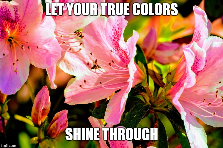 LET YOUR TRUE COLORS SHINE THROUGH | image tagged in vibrant | made w/ Imgflip meme maker