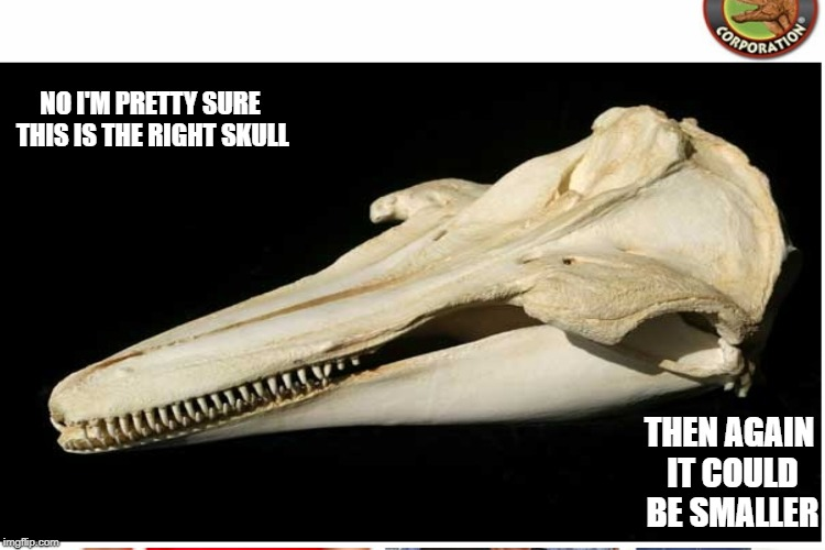 NO I'M PRETTY SURE THIS IS THE RIGHT SKULL THEN AGAIN IT COULD BE SMALLER | made w/ Imgflip meme maker