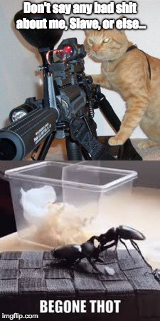 """T.H.O.T."" Cat 