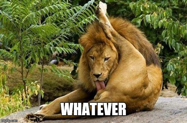 lion licking balls | WHATEVER | image tagged in lion licking balls | made w/ Imgflip meme maker