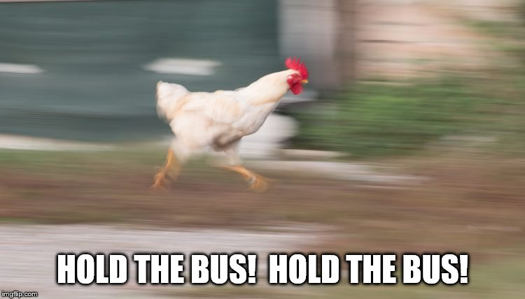 HOLD THE BUS!  HOLD THE BUS! | made w/ Imgflip meme maker