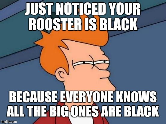 Futurama Fry Meme | JUST NOTICED YOUR ROOSTER IS BLACK BECAUSE EVERYONE KNOWS ALL THE BIG ONES ARE BLACK | image tagged in memes,futurama fry | made w/ Imgflip meme maker