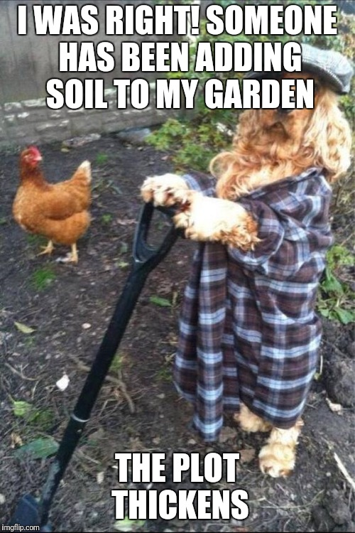 Spaniel Gardener | I WAS RIGHT! SOMEONE HAS BEEN ADDING SOIL TO MY GARDEN THE PLOT THICKENS | image tagged in spaniel gardener | made w/ Imgflip meme maker