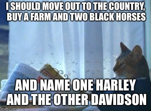 I Should Buy A Boat Cat Meme | I SHOULD MOVE OUT TO THE COUNTRY, BUY A FARM AND TWO BLACK HORSES AND NAME ONE HARLEY AND THE OTHER DAVIDSON | image tagged in memes,i should buy a boat cat | made w/ Imgflip meme maker