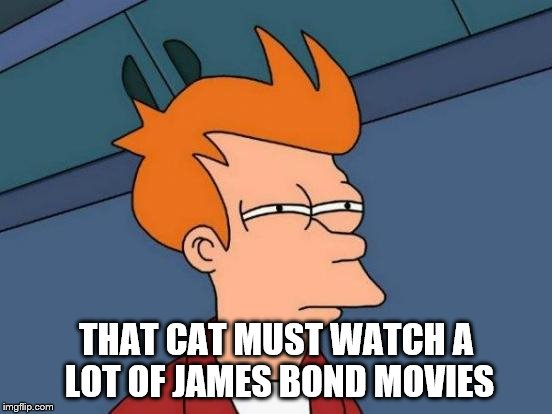 Futurama Fry Meme | THAT CAT MUST WATCH A LOT OF JAMES BOND MOVIES | image tagged in memes,futurama fry | made w/ Imgflip meme maker