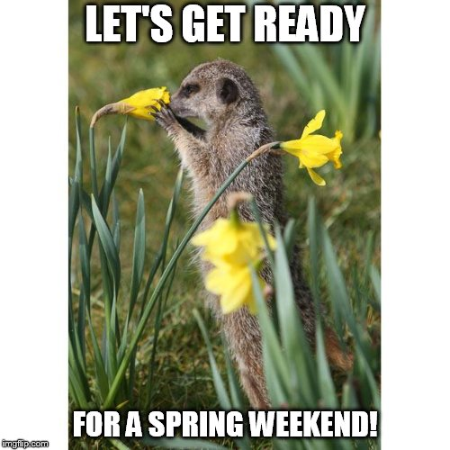LET'S GET READY FOR A SPRING WEEKEND! | image tagged in meerkat spring | made w/ Imgflip meme maker