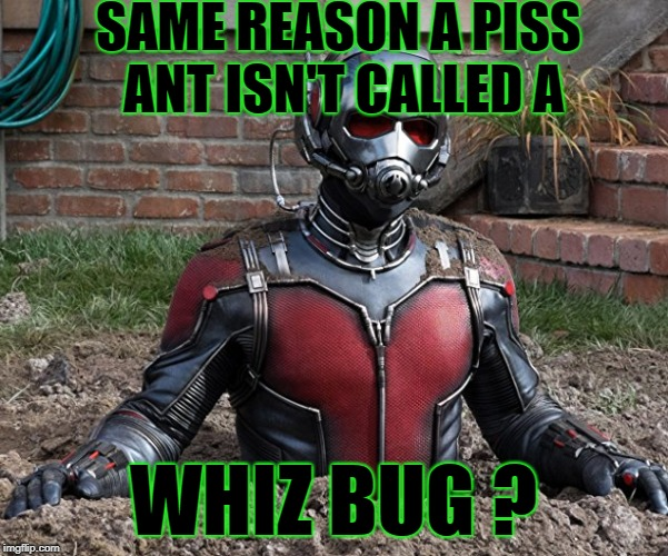 SAME REASON A PISS ANT ISN'T CALLED A WHIZ BUG ? | made w/ Imgflip meme maker