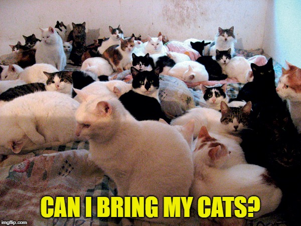 CAN I BRING MY CATS? | made w/ Imgflip meme maker