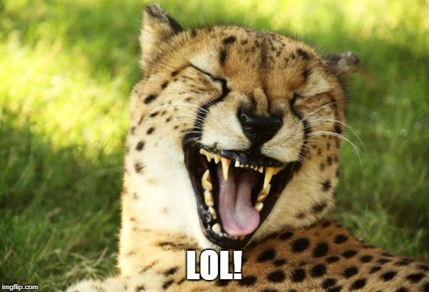 cheetah | LOL! | image tagged in cheetah | made w/ Imgflip meme maker