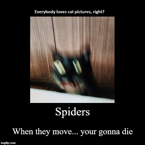 aaaa | Spiders | When they move...your gonna die | image tagged in funny,demotivationals | made w/ Imgflip demotivational maker