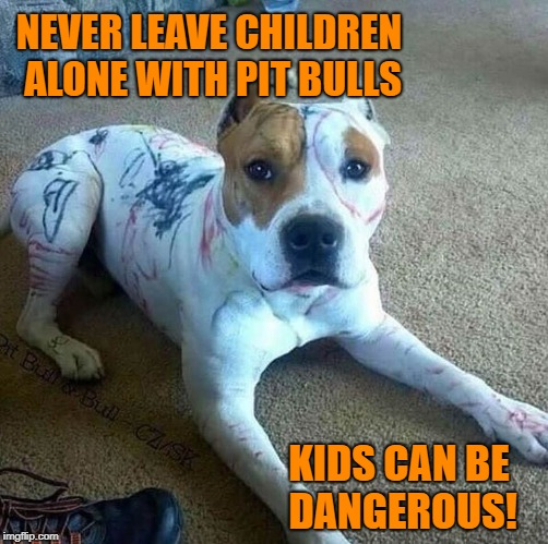 Kids and Pit Bulls - A Dangerous Mix |  NEVER LEAVE CHILDREN ALONE WITH PIT BULLS; KIDS CAN BE DANGEROUS! | image tagged in dog,dogs,pit bull,pit bulls | made w/ Imgflip meme maker