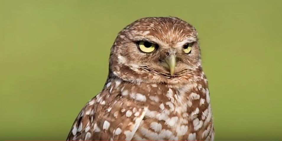 High Quality Death Stare Owl Blank Meme Template