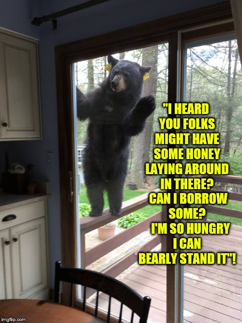"Hungry Bear Looking For Honey Can BEARLY Stand It! | ""I HEARD YOU FOLKS MIGHT HAVE SOME HONEY LAYING AROUND IN THERE?  CAN I BORROW SOME?    I'M SO HUNGRY I CAN BEARLY STAND IT""! 