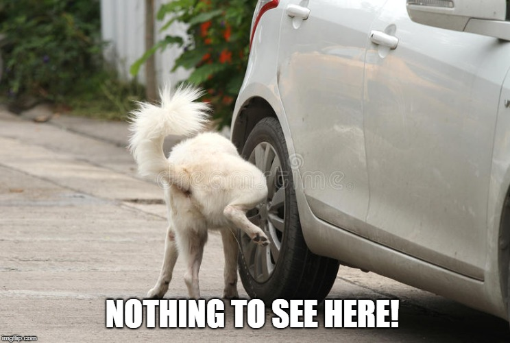 dog peeing on car | NOTHING TO SEE HERE! | image tagged in dog peeing on car | made w/ Imgflip meme maker