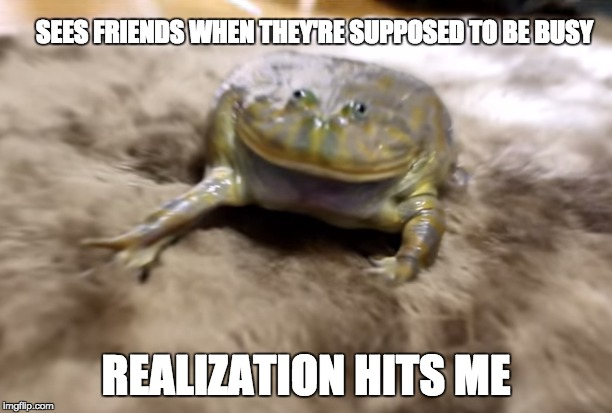 SEES FRIENDS WHEN THEY'RE SUPPOSED TO BE BUSY REALIZATION HITS ME | image tagged in memes,truth,awkward moment,funny animals,lol so funny | made w/ Imgflip meme maker