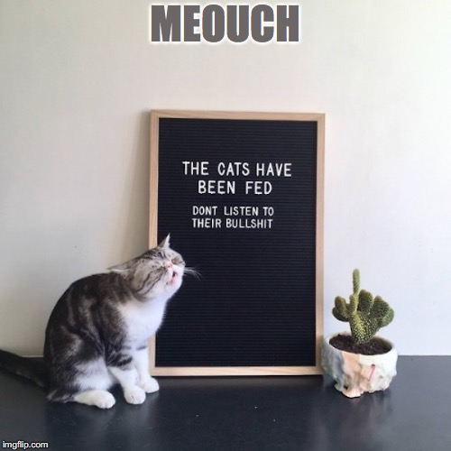 MEOUCH | image tagged in funny cats,funny signs | made w/ Imgflip meme maker