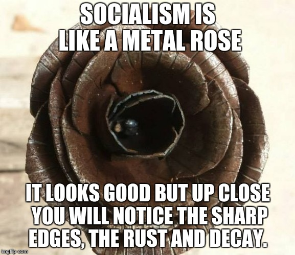 SOCIALISM IS LIKE A METAL ROSE IT LOOKS GOOD BUT UP CLOSE YOU WILL NOTICE THE SHARP EDGES, THE RUST AND DECAY. | image tagged in metal rose | made w/ Imgflip meme maker