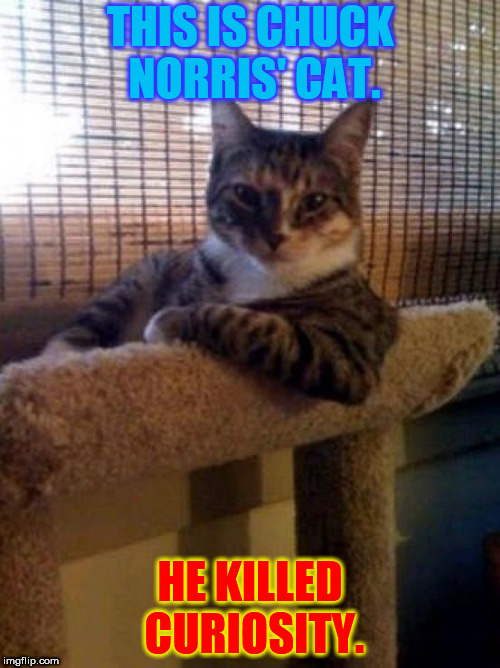The Most Superior Cat In The World |  THIS IS CHUCK NORRIS' CAT. HE KILLED CURIOSITY. | image tagged in memes,the most interesting cat in the world,chucknorris,curiosity,kill cat | made w/ Imgflip meme maker