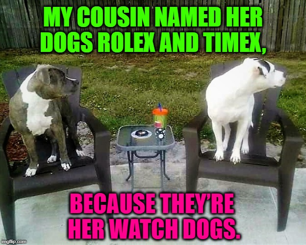 Time Tells |  MY COUSIN NAMED HER DOGS ROLEX AND TIMEX, BECAUSE THEY'RE HER WATCH DOGS. | image tagged in animals,corny joke,country,alarm,pit bull | made w/ Imgflip meme maker