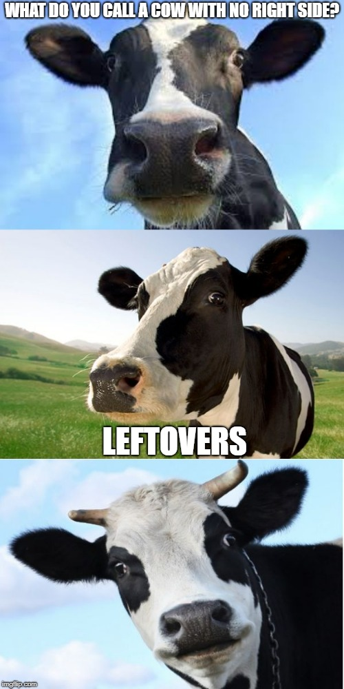 Leftovers | WHAT DO YOU CALL A COW WITH NO RIGHT SIDE? LEFTOVERS | image tagged in bad pun cow | made w/ Imgflip meme maker
