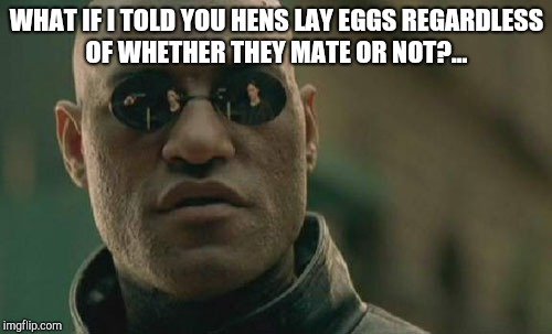 Matrix Morpheus Meme | WHAT IF I TOLD YOU HENS LAY EGGS REGARDLESS OF WHETHER THEY MATE OR NOT?... | image tagged in memes,matrix morpheus | made w/ Imgflip meme maker