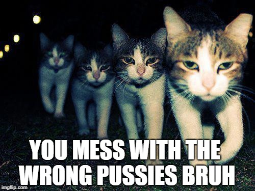 Wrong Neighboorhood Cats Meme | YOU MESS WITH THE WRONG PUSSIES BRUH | image tagged in memes,wrong neighboorhood cats | made w/ Imgflip meme maker