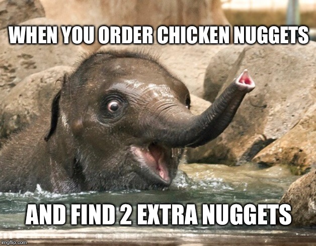 Oh happy day | WHEN YOU ORDER CHICKEN NUGGETS AND FIND 2 EXTRA NUGGETS | image tagged in elephant,chicken nuggets,cute | made w/ Imgflip meme maker