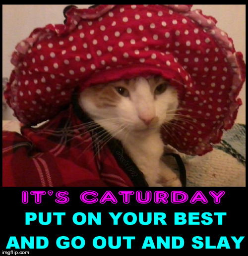 gato | image tagged in caturday,cats,saturday,cat,slayer,adventure | made w/ Imgflip meme maker