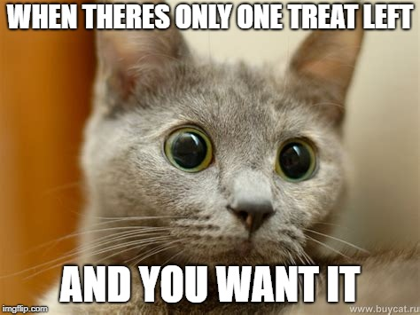 WHEN THERES ONLY ONE TREAT LEFT AND YOU WANT IT | image tagged in triggered/staring cat | made w/ Imgflip meme maker