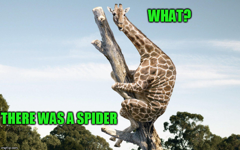 WHAT? THERE WAS A SPIDER | made w/ Imgflip meme maker