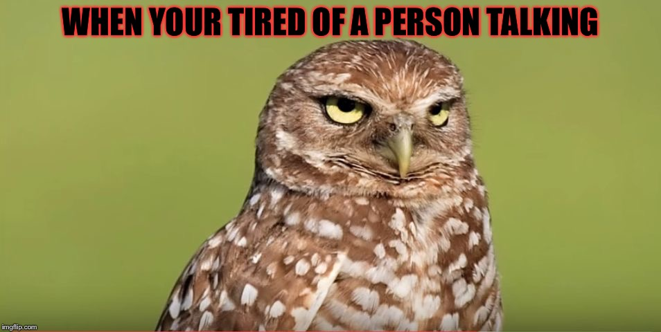 Thanks DoctorDoomsday180 for putting this template up! | WHEN YOUR TIRED OF A PERSON TALKING | image tagged in death stare owl,masqurade_,memes,meme,seriously stop,doctordoomsday180 | made w/ Imgflip meme maker