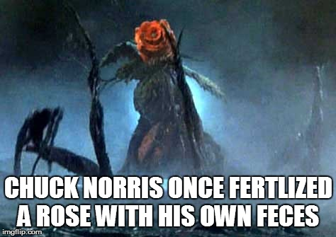 CHUCK NORRIS ONCE FERTLIZED A ROSE WITH HIS OWN FECES | image tagged in biollante rose form,chuck norris | made w/ Imgflip meme maker