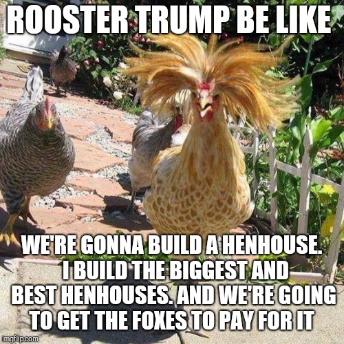 Chicken Week, April 2-8, a JBmemegeek & giveuahint event! I saw an old meme like this and to make one for Chicken Week lol  | ROOSTER TRUMP BE LIKE WE'RE GONNA BUILD A HENHOUSE.  I BUILD THE BIGGEST AND BEST HENHOUSES. AND WE'RE GOING TO GET THE FOXES TO PAY FOR IT | image tagged in trump rooster,jbmemegeek,giveuahint,chicken week,trump,chickens | made w/ Imgflip meme maker